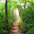 In the Light - path at Herman Baker Park, Sherman, Texas by aprilann