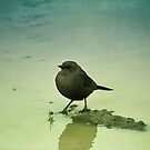Blackbird II by Lynn Starner