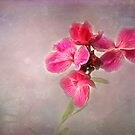 Pink Wallflower by Roz Cooper