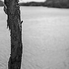 Trunk by Lake - Lennox Head by Daniel Rankmore