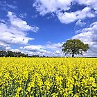 Rape Field by LarsTuchel