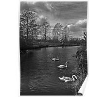 Swans On The Stour Poster
