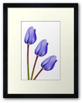Purple Tulip Trio by Natalie Kinnear