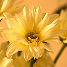 Mellow Yellows by Roz Cooper