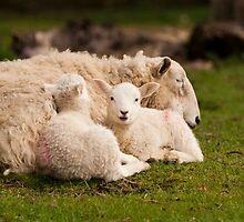 Mum's Sleeping Now. by CJTill