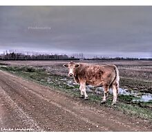 Back road hitchhiker Photographic Print