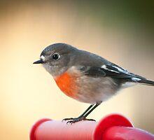 Robin Red Breast by Jodi Turner