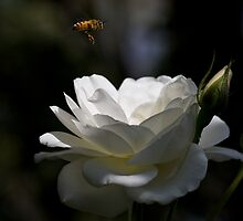 Iceberg with bee by zzsuzsa
