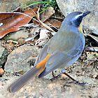 Kirstenbosch Bird by Graeme  Hyde