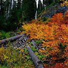 Full Fall Colors by Charles &amp; Patricia   Harkins ~ Picture Oregon
