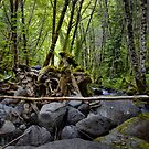 Left Behind ~ Canyon Creek ~ by Charles & Patricia   Harkins ~ Picture Oregon