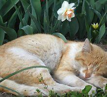 Sweet spring dreams by Maria1606