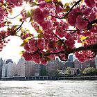 Manhattan Through the Cherry Blossoms by wlotus