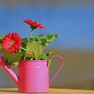 The watering can  by NewfieKeith