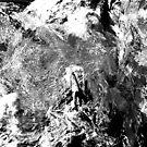 Symphony in White and Black by Benedikt Amrhein