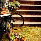 The succulent bike by chasingsooz