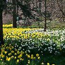 Spring time at Niagara Falls by Jason Dymock Photography
