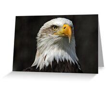 Bald Eagle Gazing Greeting Card
