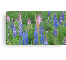 Shimmering Lupin Light Nr 9 Canvas Print