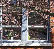 window of plum blossoms by TerrillWelch
