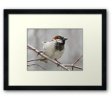 Wide Stance Framed Print