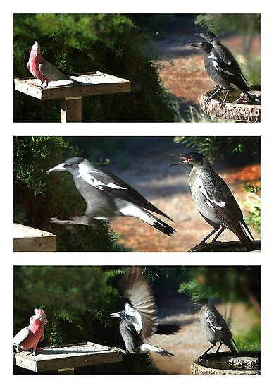 Confrontation by Eve Parry