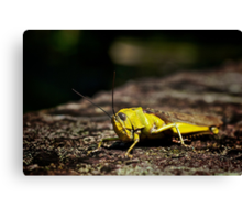 Not so mellow in yellow.... Canvas Print