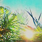 Sunlight through Palms by Chantal  Vincent