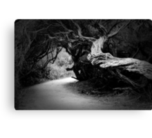 Twisted Beauty Canvas Print