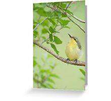 Hi Mum - baby sunbird in my garden. Greeting Card