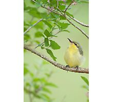 Hi Mum - baby sunbird in my garden. Photographic Print
