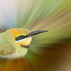 Rainbow Bee-eater  by Jenny Dean