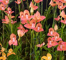 Peach Glasgow Orchids by Circe Lucas