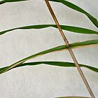 15/4 leaves and bamboo by Evelyn Bach