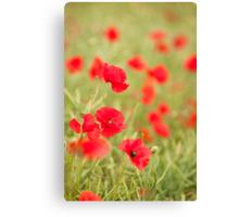 Poppy Red Canvas Print