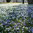 Spring Flowers by sanham