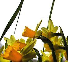 Traveling Daffodils Hurrying Through Arlanda Airport by ArtOfE