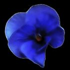 Fractalius Blue Pansy by Lynn Bolt