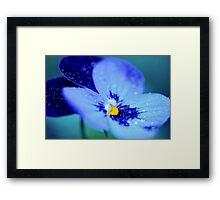 Pansy Blues Framed Print