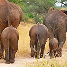 Baby Elephant Walk by Linda Sparks