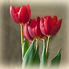 Tulips by ladygarbanzo