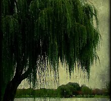 My special weeping willow tree © by Dawn M. Becker