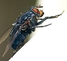 Blue Fly by Otto Danby II