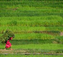 Woman Harvesting Crops near Bhaktapur by SerenaB