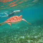 swimming with turtles by zinchik