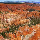 Canyon formations by Erika Price