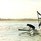 Dog Surf by STEPHANIE STENGEL | STELONATURE PHOTOGRAHY