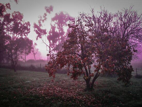 Purple morning by Louise Delahunty