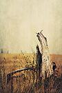 Marsh Tree by KBritt