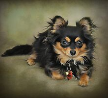 Chihuahua by JaninesWorld
